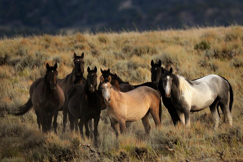 Wildhorses And Burros Versus Government Economic Interests