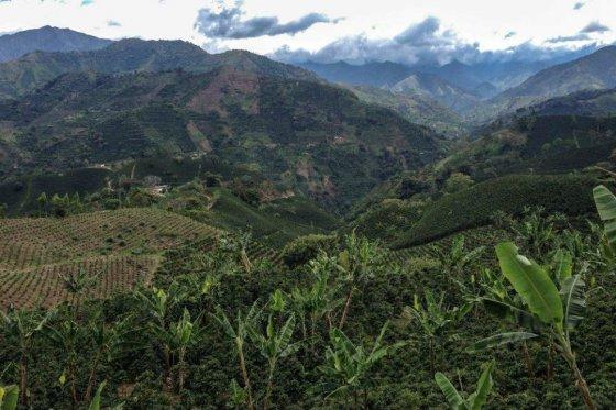 Miner a en jard n antioquia colombia ejatlas for Antioquia jardin