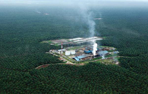 Wilmar International sugar plantations in Meraukee, Papua, Indonesia